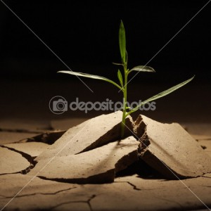 dep_5646433-Sprout-in-dry-ground